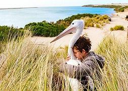 Історія про дивовижну дружбу хлопчика і птаха